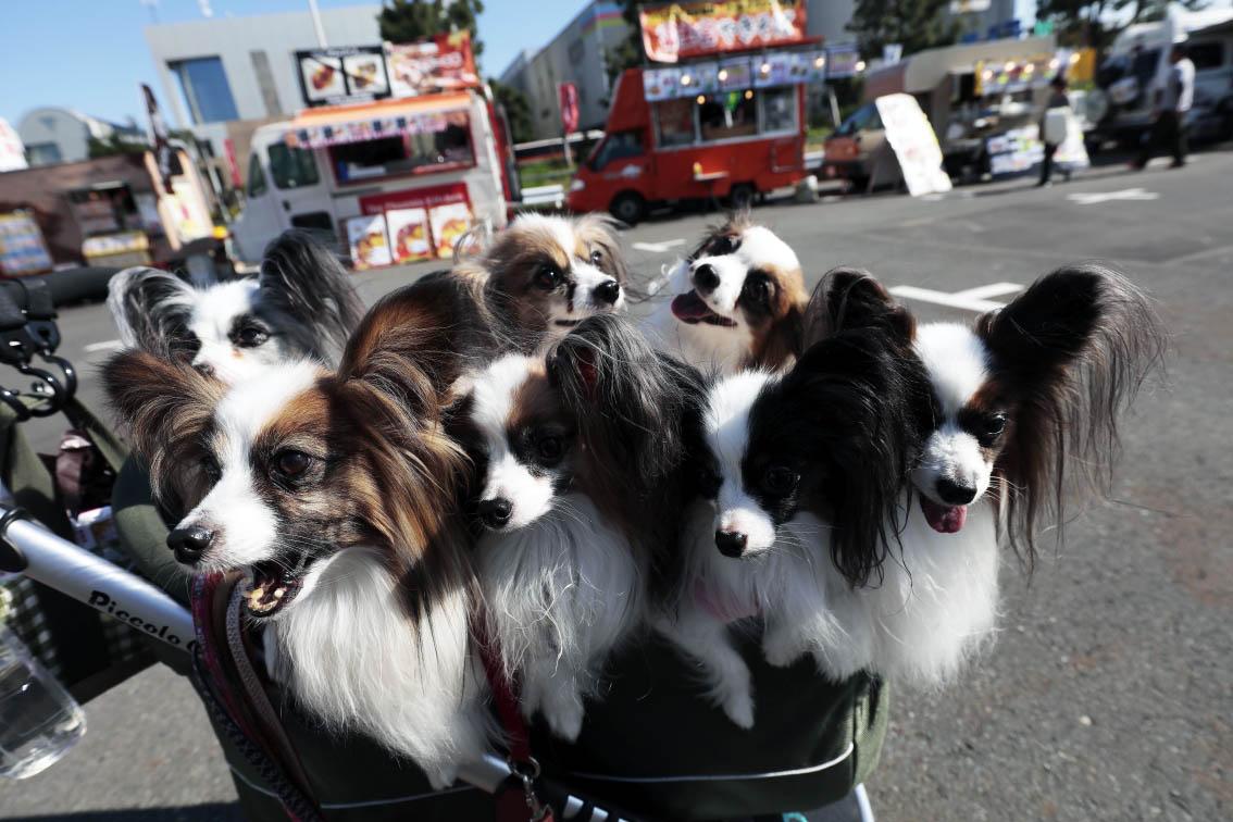 お台場キャンピングカーフェア2018 犬